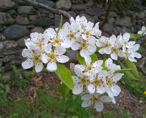 fiori natura bed breakfast berbenno
